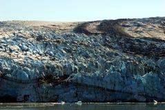 льдед пустыни Стоковые Изображения RF