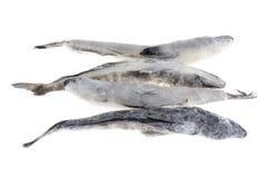 льдед рыб крупного плана Стоковое Фото
