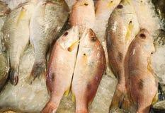 льдед рыб свежий Стоковые Изображения RF