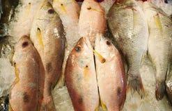 льдед рыб свежий Стоковые Фотографии RF