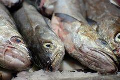 льдед рыб свежий Стоковая Фотография RF