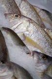 льдед рыб Стоковые Фотографии RF