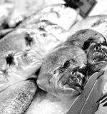 льдед рыб Стоковое Изображение