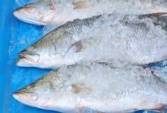льдед рыб Стоковая Фотография