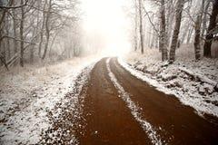 льдед холмов тумана кипариса Стоковое Фото