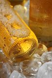 льдед холода пива Стоковая Фотография