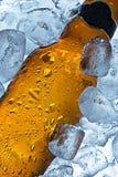 Льдед - холодное пиво Стоковые Изображения RF