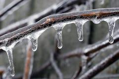 льдед хруста Стоковая Фотография RF