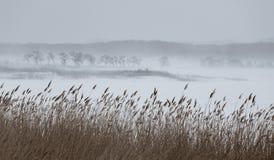 Льдед (bokeh) зимы 2 Стоковое Изображение RF