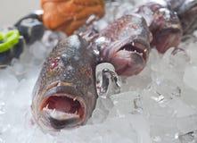 льдед grouper рыб свежий Стоковые Изображения