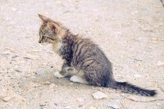 Любимец помех кота котенка милый мало стоковые фотографии rf