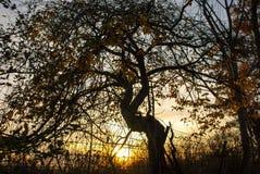 Любимое дерево на заходе солнца Стоковые Фото
