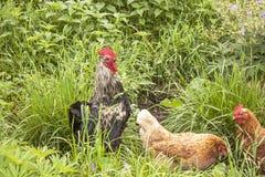 Любимчики в траве Стоковые Фото