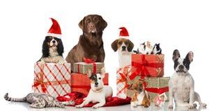 Любимчики рождества Стоковые Изображения RF