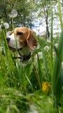 любимчик в траве стоковая фотография rf