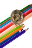 любимчик карандашей Стоковое Фото