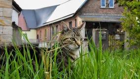 Любимчик Gras кота малый умный славный Стоковые Изображения