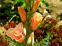 Любимые цветки Стоковое фото RF