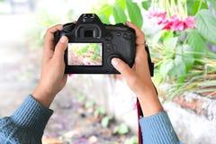 Любительские фотографы используют камеру для того чтобы посмотреть цветки улицы стоковые изображения rf