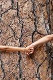 Любовники земли природы - huggers дерева держа руки Стоковая Фотография RF