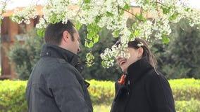 Любовники соединяют романтичную дату под деревом цветения, человека аранжируют цветок в волосах женщины, счастливых усмехаясь сто сток-видео
