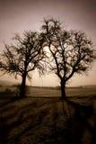 любовники старые 2 Стоковое Изображение