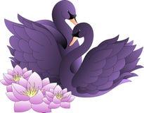 Любовники, черные лебеди с цветками лотоса Стоковая Фотография RF