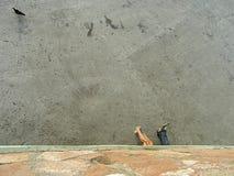 любовники Стоковые Фото