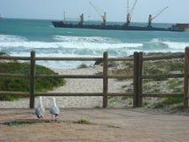Любовник на заливе дельфина Стоковое Фото