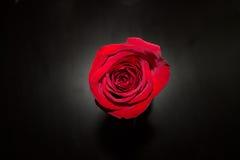 Любовь мам Стоковое Фото