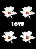 Любовь Стоковые Фото