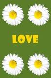 Любовь Стоковые Изображения