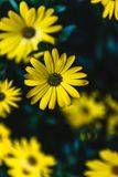 Желтый цвет в зеленом цвете стоковые изображения rf