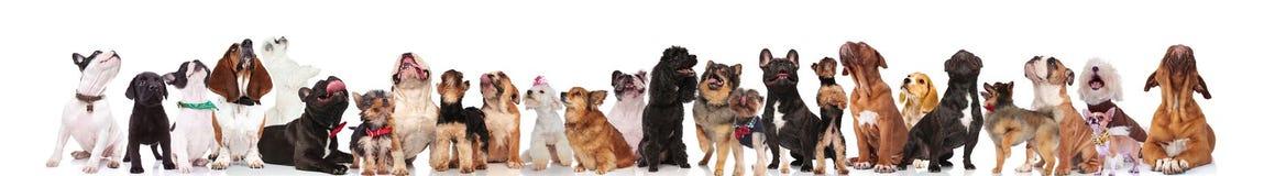 Любознательная команда lookin много различного собак вверх стоковое изображение rf