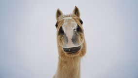 любознательная лошадь Стоковые Фотографии RF