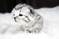 любознательний котенок Котенок младенца любознательный котенок Стоковые Фото