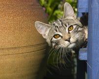 любознательний котенок Стоковое Фото