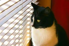 Любознательний кот Стоковые Изображения