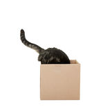 Любознательний кот Стоковое Изображение