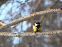 Любознательная птица Стоковое Изображение