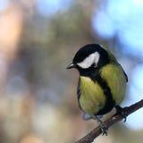 Любознательная птица Стоковое фото RF