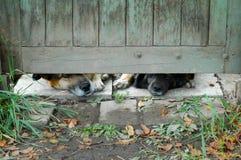 Любознательная собака Стоковое Изображение RF