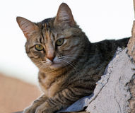 Любознательное кошачье Стоковое Изображение