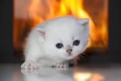 Любознательный котенок Стоковое Фото