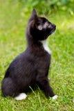 Любознательный кот на траве Стоковые Изображения