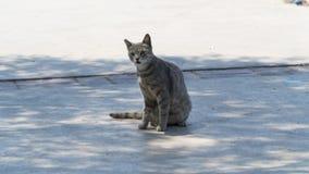 Любознательный кот на тротуаре Стоковое фото RF