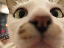 Любознательный кот проверяет меня вне Стоковая Фотография