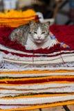 Любознательный кот Стоковая Фотография RF