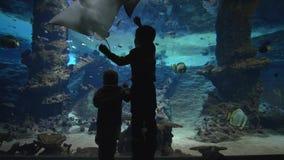 Любопытные маленькие братья наблюдая подводную жизнь мира рыб стоя около большого аквариума акции видеоматериалы