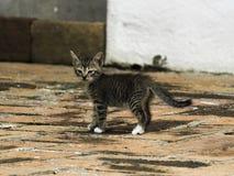 Любопытный котенок исследуя в первый раз стоковая фотография